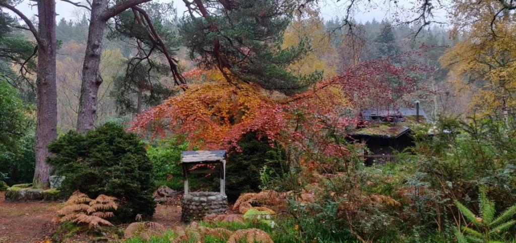 Well & summerhouse in woods