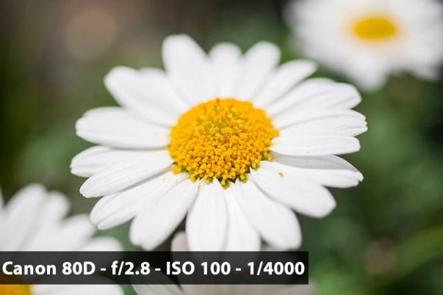 Canon EF-S 35mm f/2.8 Makro IS STM