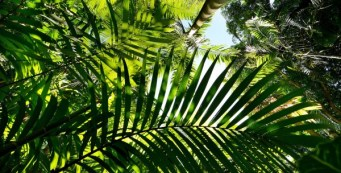 Online Merwin Palm Collection Database Now Available!