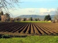 Sibienii câştigă pariul cu agricultura