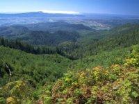 Protejarea biodiversității, un domeniu în care Bogdan Trif (GNM) își dorește să colaboreze cu autoritățile americane