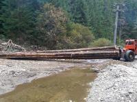 Comisariatul Gărzii de Mediu Sibiu a închis 4 exploatări forestiere şi a aplicat amenzi în valoare de 341.000 lei