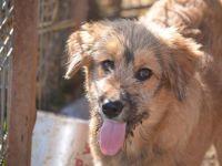 Adoptă un prieten – Nuka | O campanie Mesagerul de Sibiu și AnimalLife