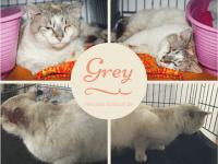 Adoptă un prieten – Grey