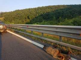Drumarii au găsit SOLUȚIA: urșii, protejați cu indicatoare!