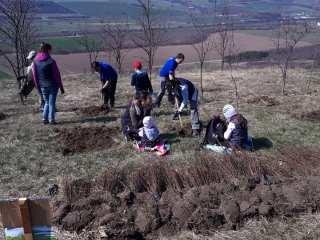 Voluntarii de la ThyssenKrupp au plantat 600 de salcâmi