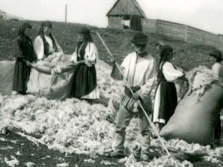 Povestea lânii de la Sadu