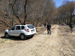 12 cereri din Sibiu pentru ajutorul dat proprietarilor de păduri