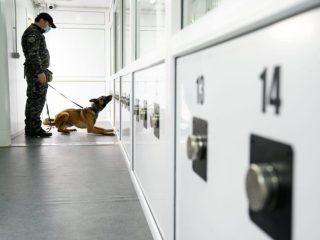 Câini antrenați la Sibiu pentru detectarea persoanelor infectate cu virusul SARS-Cov-2