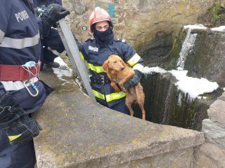 FOTO: Un cățeluș căzut în canal și două pisici pe acoperiș au avut nevoie de pompieri