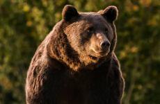 Bogdan Trif: Coaliția de guvernare a ajuns să vândă pielea ursului din pădure. La propriu!