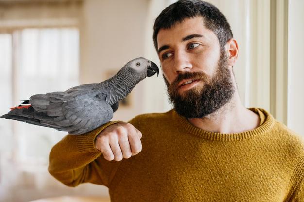 bonnes adresses / glossaire (perroquet)