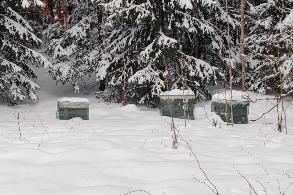 Mehiläisten talvi