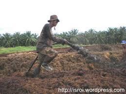 Cara Pengolahan Limbah Kelapa Sawit menjadi Pupuk Organik sebagai Pemanfaatan Limbah Secara Maksimal