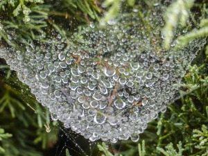 spider-web-436125_1920