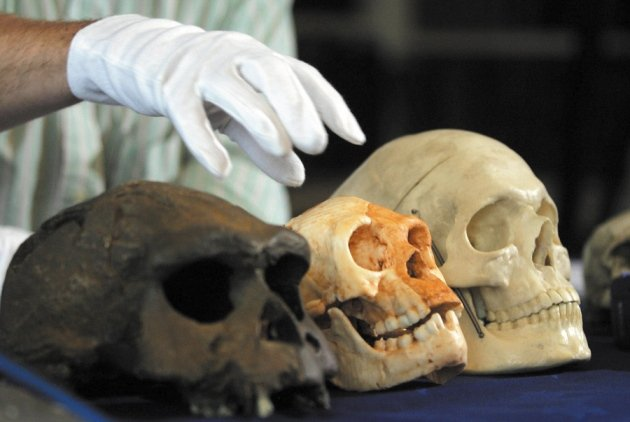 "Controversial Theory Suggests ""Hobbits"" Were Not Human"