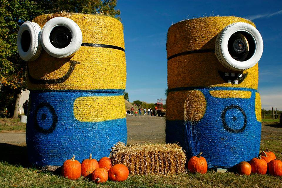 The Minions welcome you to the Fall Festival!