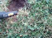 Metal Detecting a park with Tesoro Cibola vs Garrett Ace 250