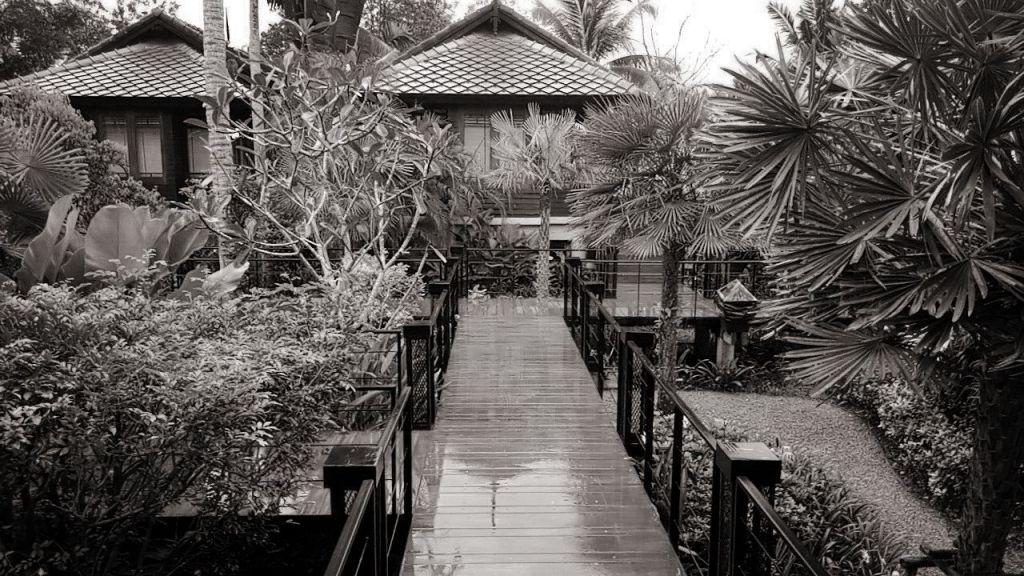 גשם בתאילנד