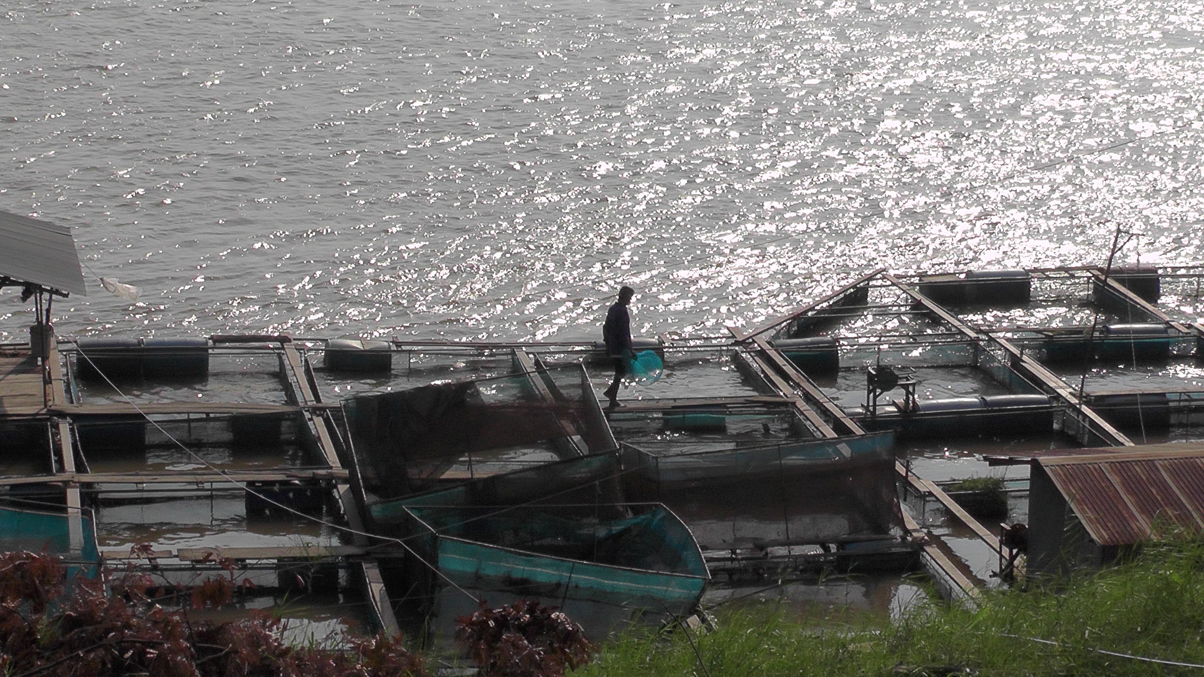 חוות דגים ליד מוקדהן
