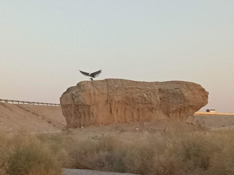 פסל הנשר נחל צין ערבה