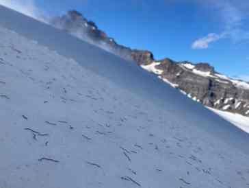 Invasione di vermi di ghiaccio nel Nord America