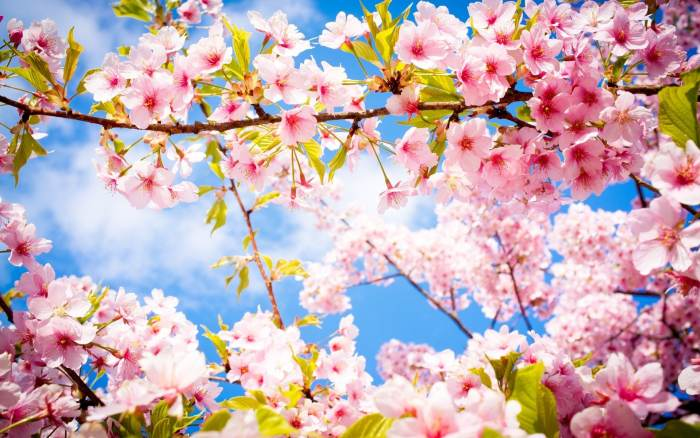 Aujourd'hui c'est le printemps