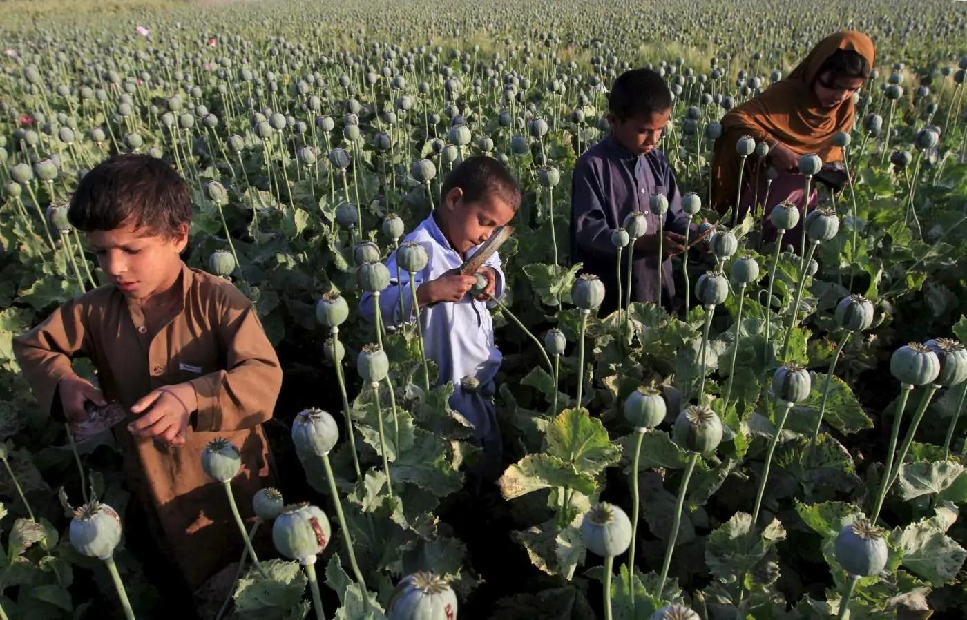 bambini oppio afghanistan