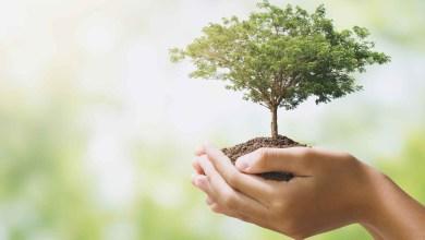 Photo of San Valentino ecologico a Locri: coppia di sposi pianterà due alberi in centro