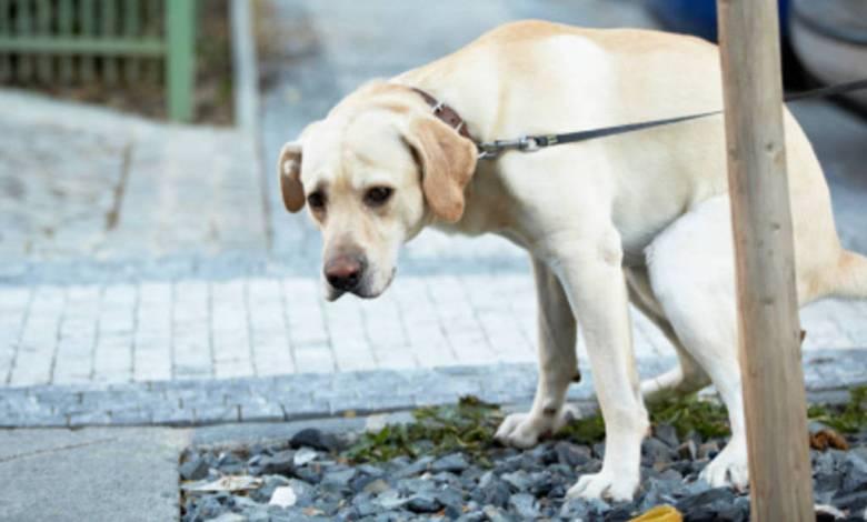 Photo of Ardore: tolleranza zero nei confronti dei proprietari incivili dei cani
