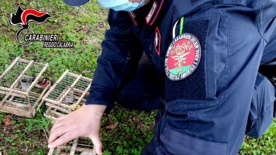 Photo of Deteneva illegalmente 18 cardellini. denunciato