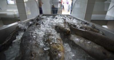 Intoxicação após ingestão de peixe é causa de doença misteriosa, indica estudo
