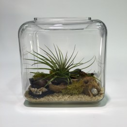 Tillandsia Simply Set