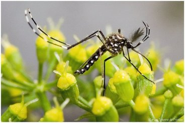 mosquito-salud-publica