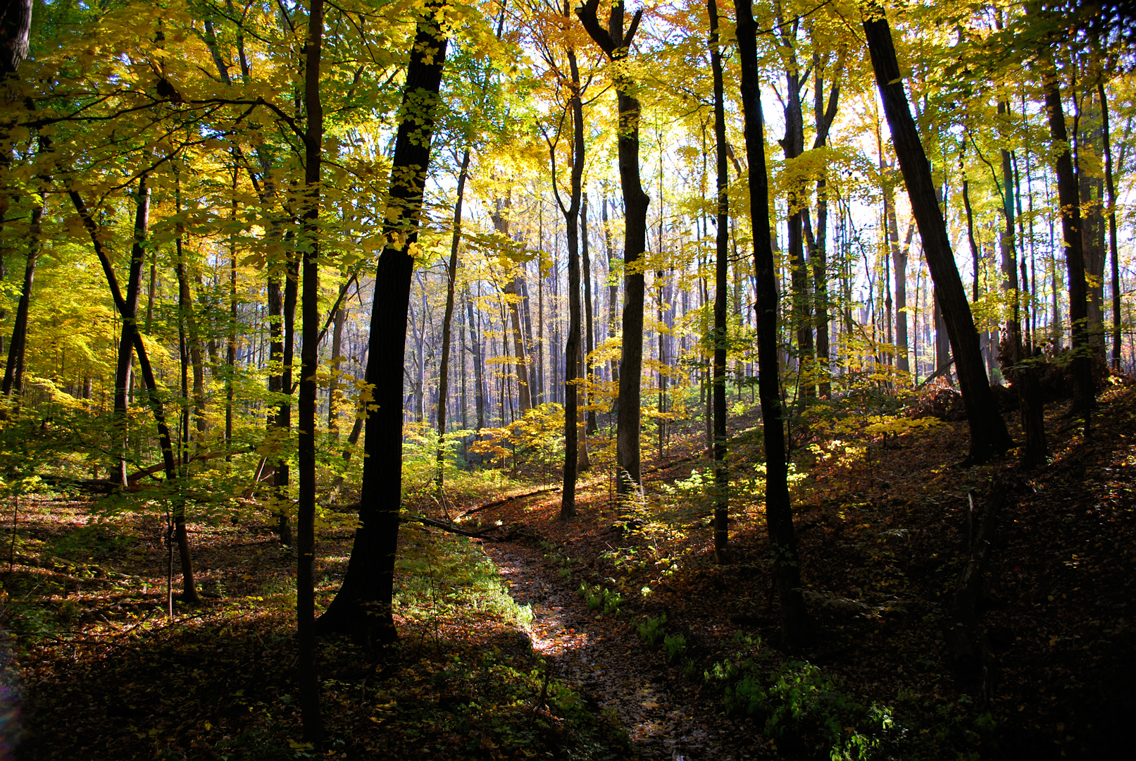 The Importance And Beauty Of Forests Metro Parks