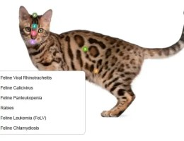 Očkování koček akoťat