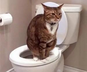 průjem u koček