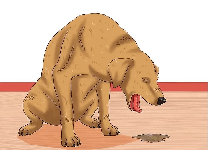 Zvracení u psa