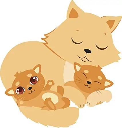 porod u kočky