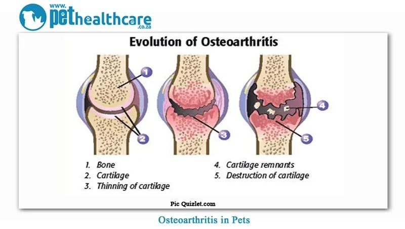 unguent pentru tratamentul artrozei coloanei vertebrale