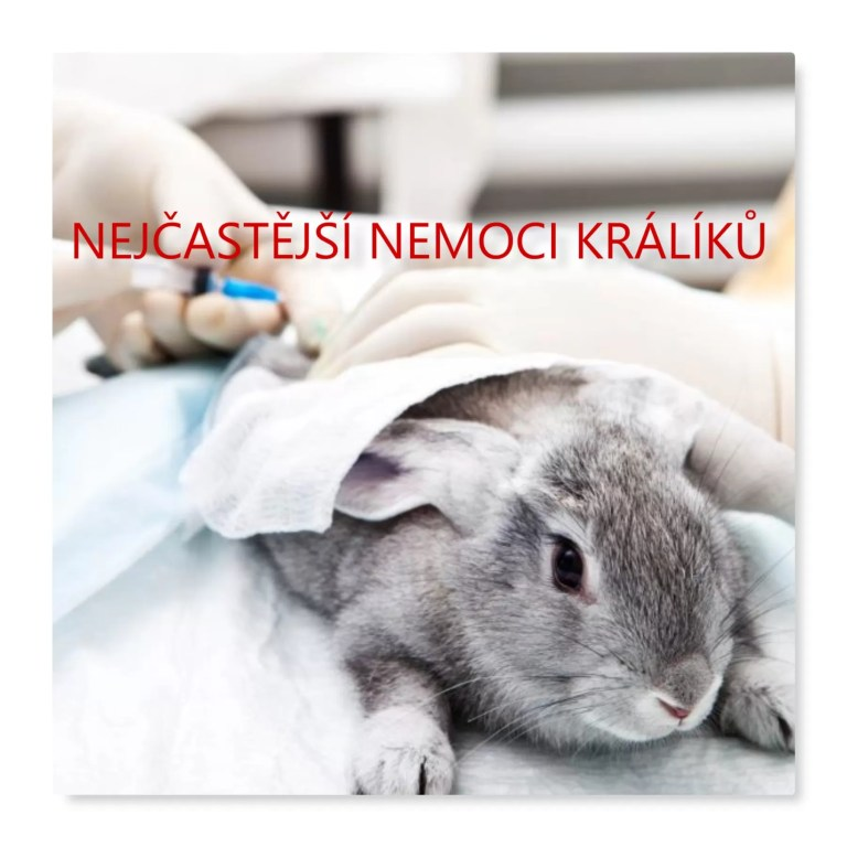 Nejčastější nemoci králíků