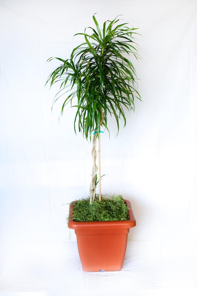 Most Popular Indoor Plants