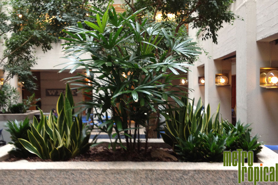 Interior Landscaping Office  Interior Landscaping Office R   Faacusa co interior landscaping office  contact metro tropical plant company today to  learn more about our office