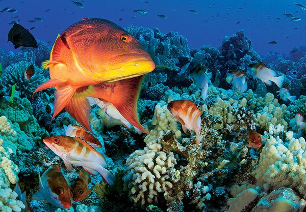 National-Geographic-museum-tomorrow,-Pristine-Seas--The-OceanÔÇÖs-Last-Wild-Places