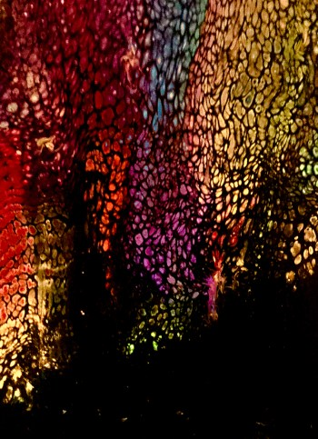 Elise Ritter: Backlit Leaves & Monarchs