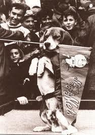 homer the beagle mets
