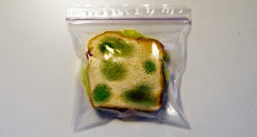 Nachher: Das Sandwich wird durch die Schimmel-attrappe geschützt