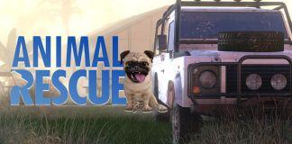 Animal Rescue: Jogo anunciado para 2021 no PC e consoles