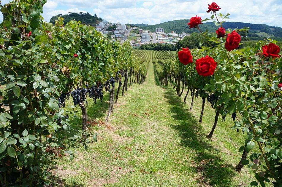 Flores da Cunha | Vinícola Luiz Argenta