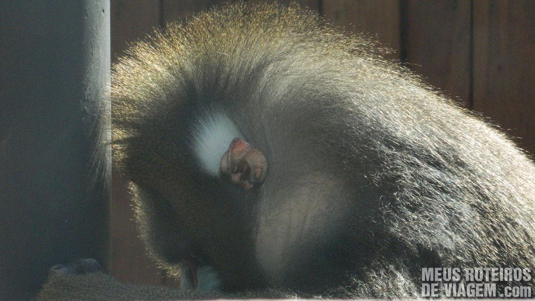 Macaco no Zoológico de Balneário Camboriú